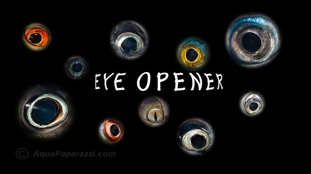 eye_opener02_640x360